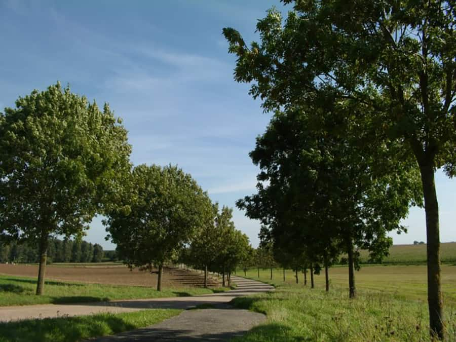 the lush green hills and tree lined streets of Haspengouw